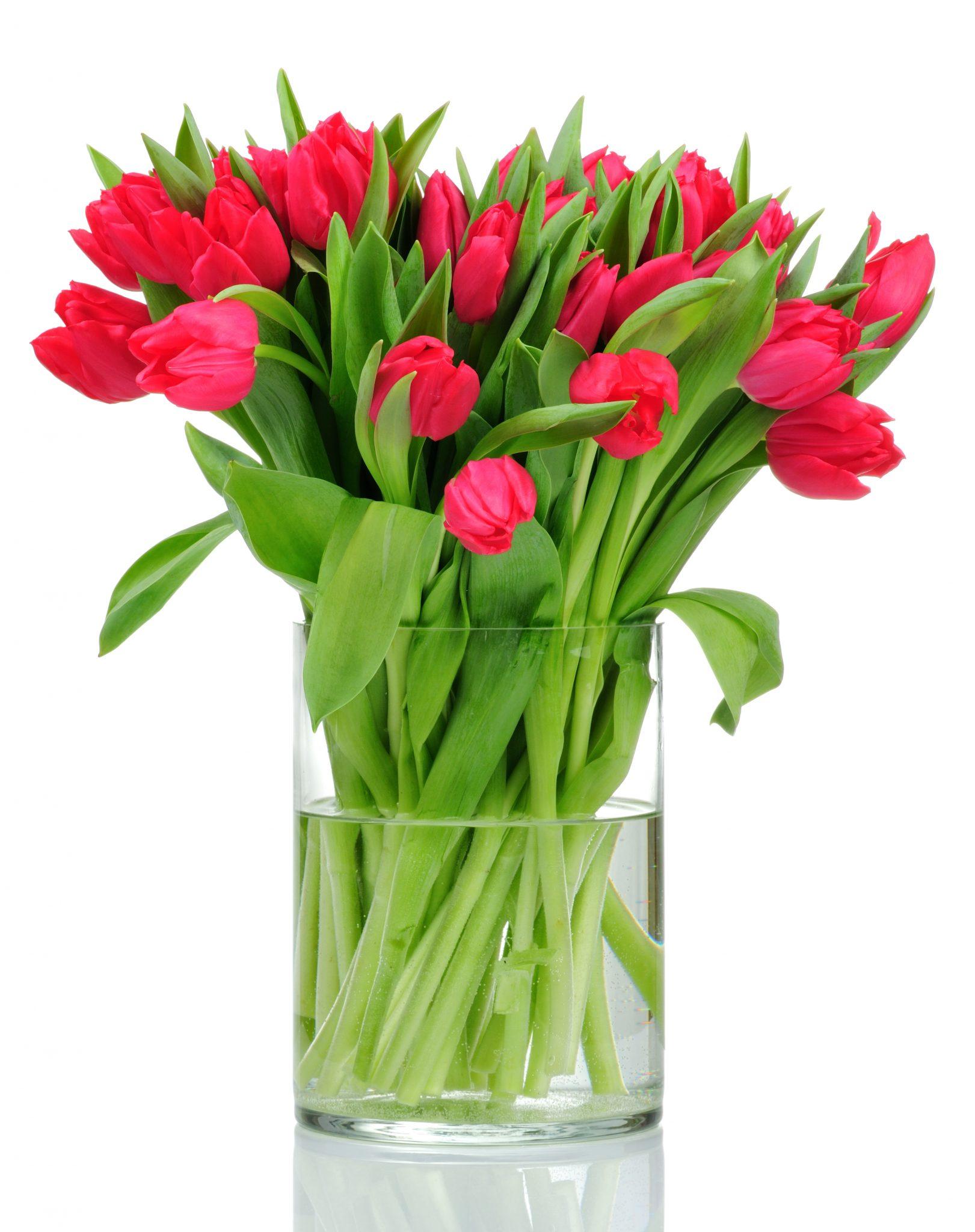 Tulpen Op Vaas.Rode Tulpen In Vaas Flowers Insight